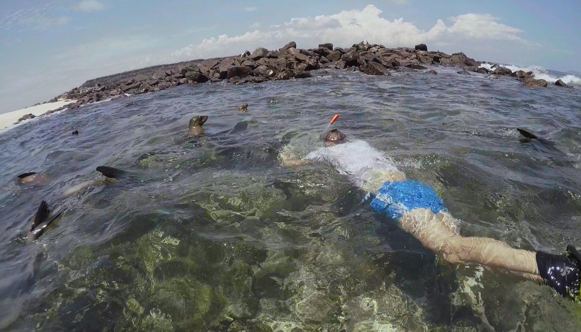 Galapagos Schnorcheln.JPG