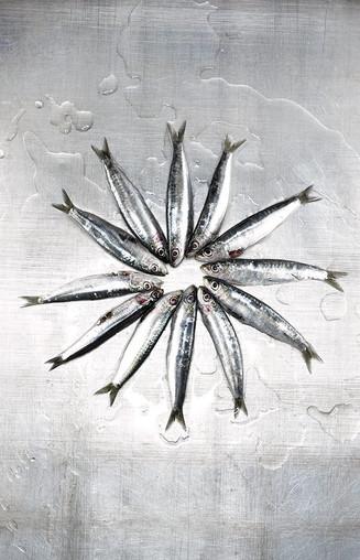 18_meeresfuechte_free__sardinen_17666.jp