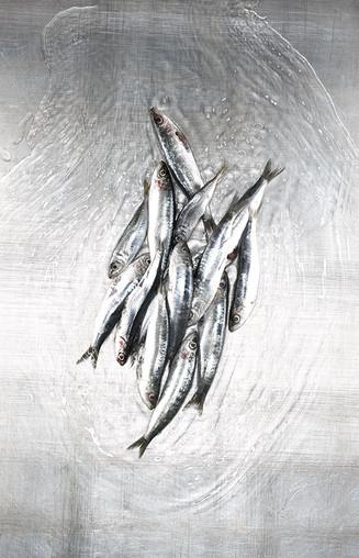 18_meeresfuechte_free__sardinen_17670.jp