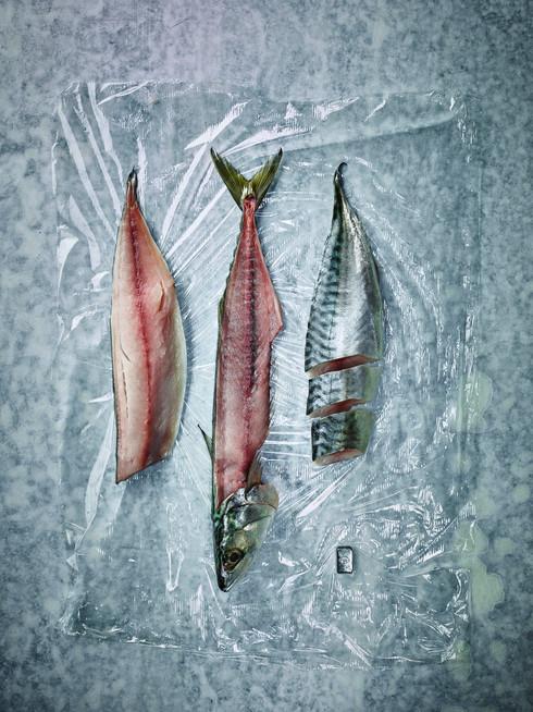 Makrele arty