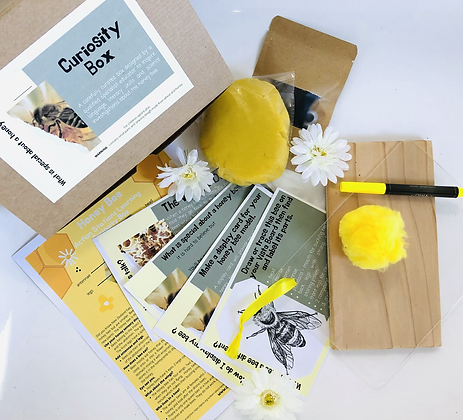 Curiosity Box  - What is special about a honey bee?