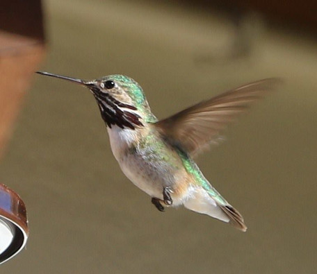 One of our Hummers!