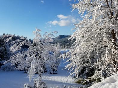 Sunny Wintery Day