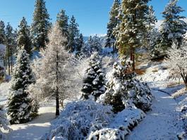 Winter at the Fox Den