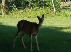 Our Wildlife Visitors