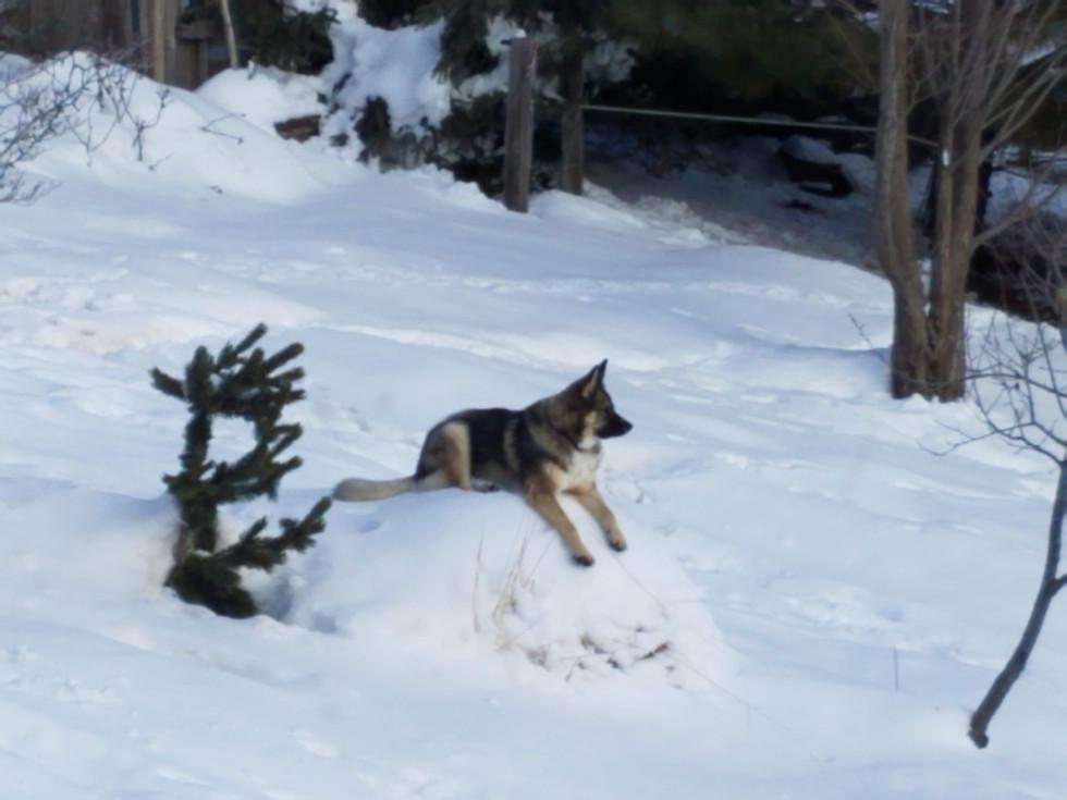 Maya Perched on a Snow Mound
