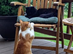 Fox Den Bookend Cats Balou (Orange) and Dakota (Black)