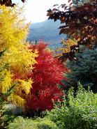 Fall Color at Fox Den