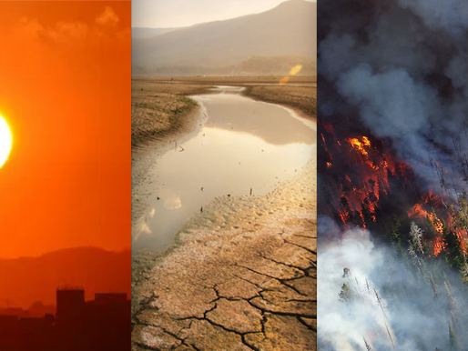 Bay Area Adaptation News Special Edition: Heat, Drought, Fire