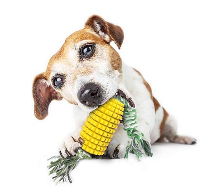Corn on the cob dog chew
