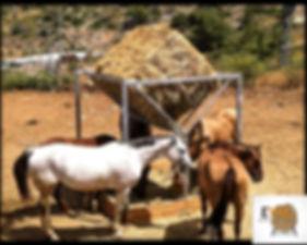 מתקן האכלה לסוסים