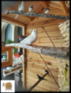 כלוב עץ לציפורים