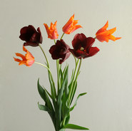 tulips15.40cm.jpg