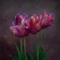 Tulip - Blue Parrot