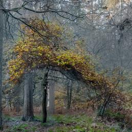 Savernake Forest 20/21