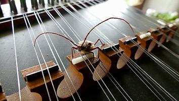 Joas Koukl Music Lessons Connecting Music