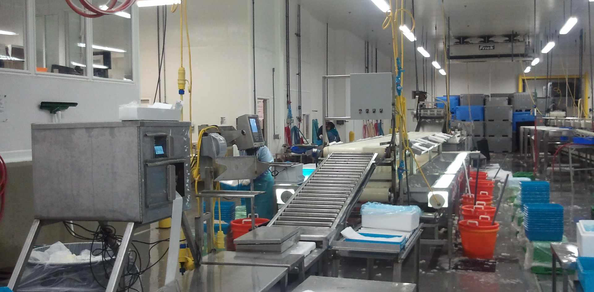 Fish Processor