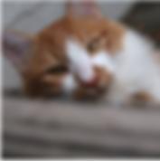 スクリーンショット 2020-05-09 9.24.40.png