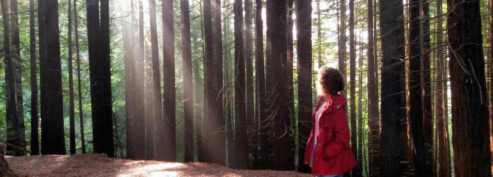 Bosque Secuoyas