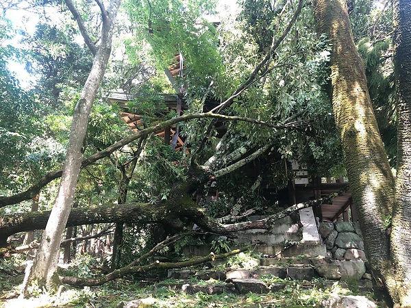 鳳凰閣に倒れる槇。二階の屋根の銅板が垂れ下がっています。