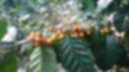 Doi Tung Plantage (2).JPG