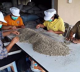 Verarbeitungsprozess von Rüegg's Kaffee