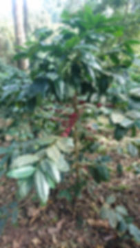 Hoe Mhak Plantage (19).JPG