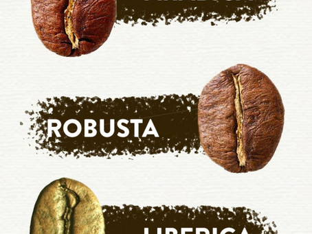 Arabica vs Robusta vs Liberica
