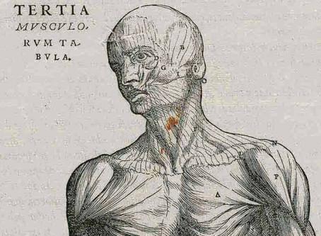 La fabrique du corps humain, le cabinet anatomique