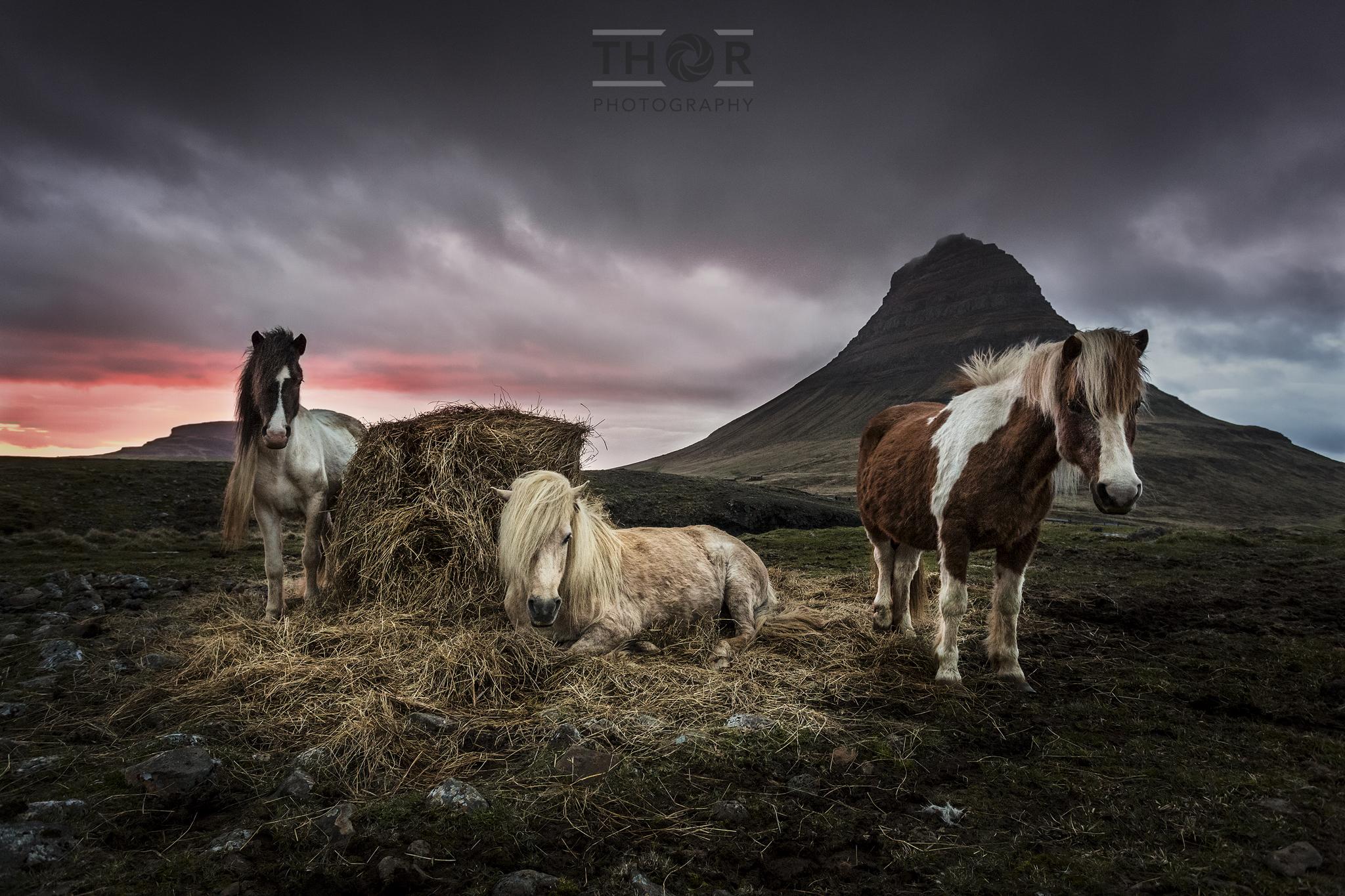 Kirkufell-hestar