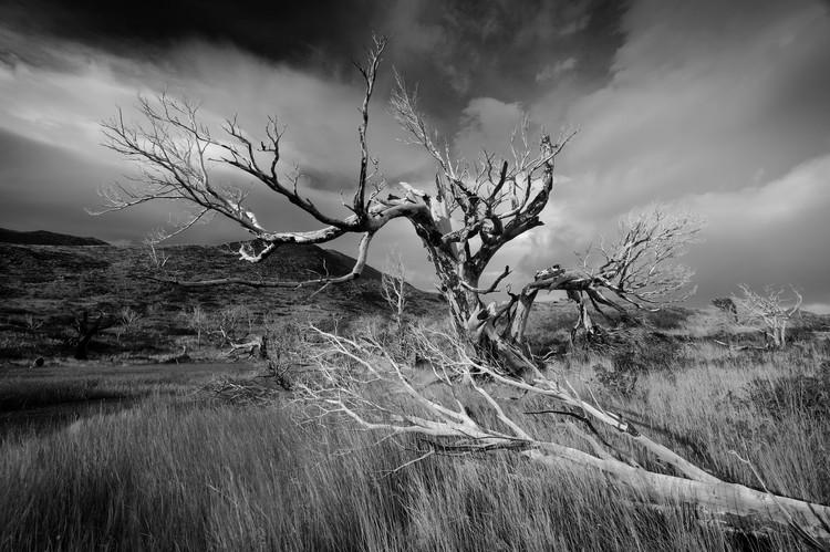 Tree-patagonia.jpg