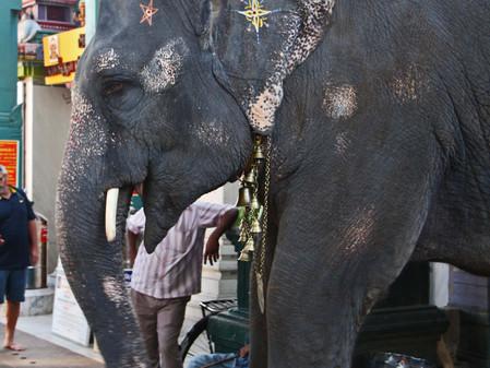 Lundi 26: visite de Pondichery