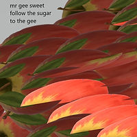 mr gee sweet - sugar cover square 4.jpg
