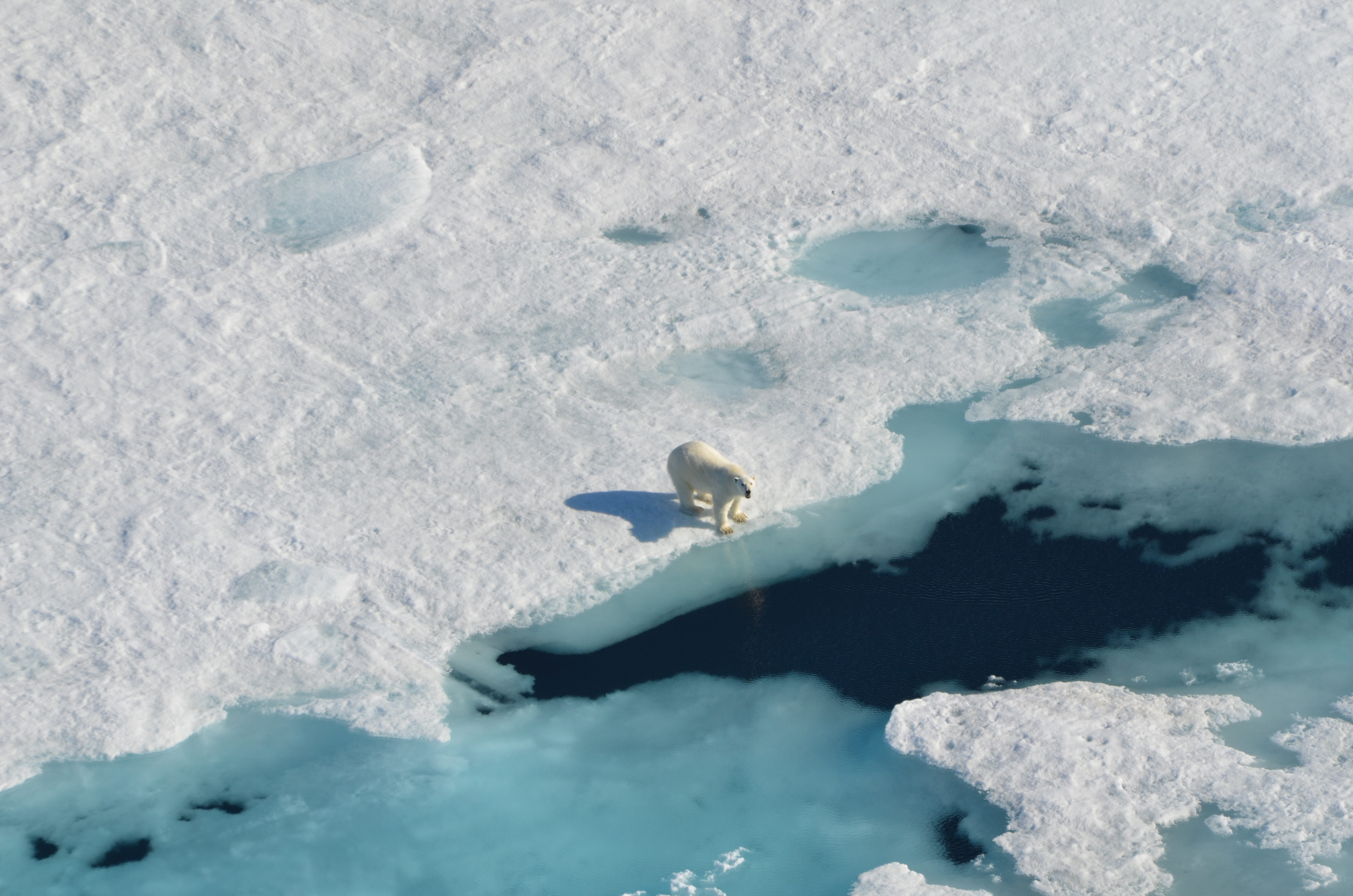 Ilulissat Icefjord & Iceberg Safari