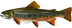 Brook_trout_DuaneRavenArt.png