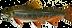 Brook_trout_DuaneRavenArt.png