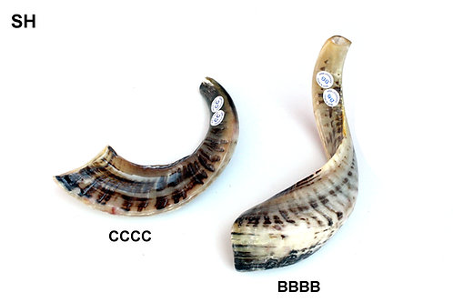 NATURAL SHOFAR