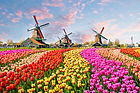 Amsterdam guided city tour