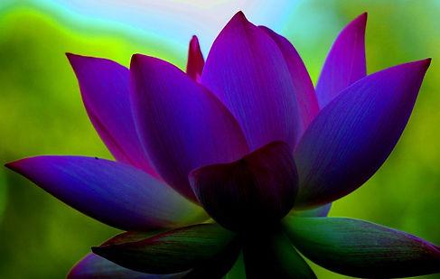 ltus purple.jpg
