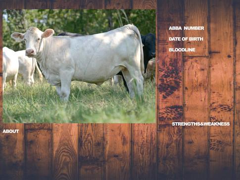 cattlespectemplatejpg.jpg