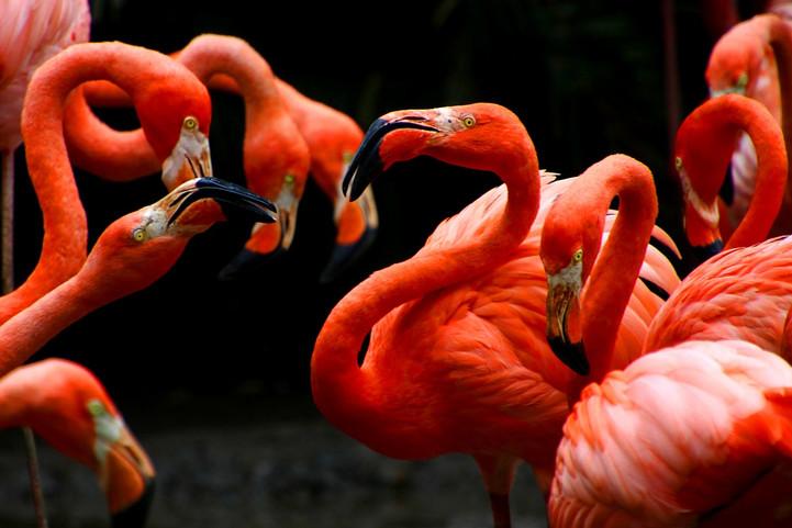 flamingos-4240669_1280.jpg