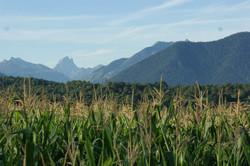 Maïs ET Pic du Midi d'Ossau.
