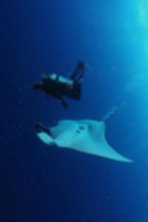 Manta_diver_small.jpg
