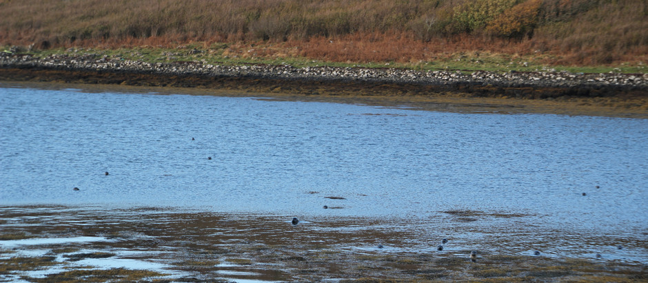 Wie viele Seehunde siehst Du? (How many seal can you spot?)