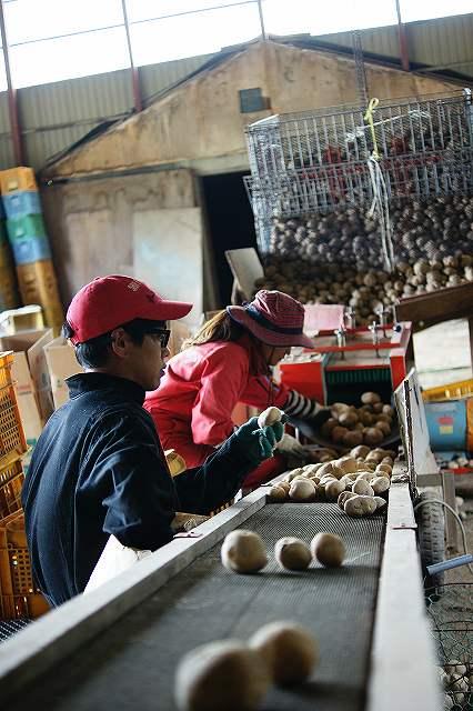 9月~10月 ジャガイモの収穫・選別