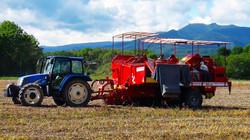 Sep-Oct, Harvesting & sorting potato
