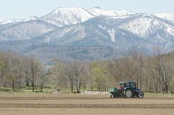 Mid-May, Planting potatoes