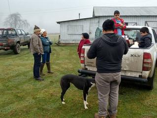 Esterilización de mascotas comenzó operativos en sectores rurales