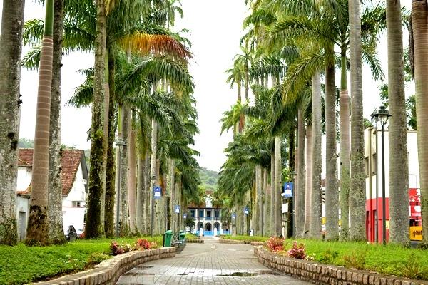 Turismo em Joinville  RUA DAS PALMEIRAS
