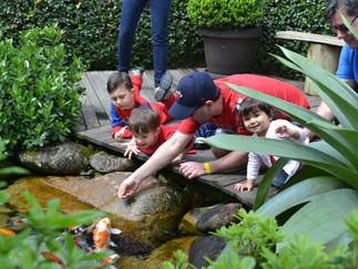 Jardim de Lírios em Joinville!